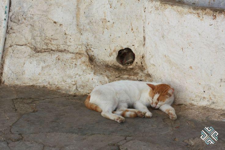 Cat sleeping on the narrow sidewalks of Hydra #travel #animals #cat #pet #passionforgreece #Hydra