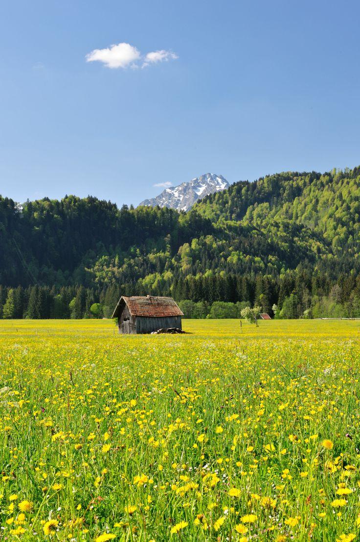 Frühlingswiese bei Oberstdorf.  #Blumenwiese
