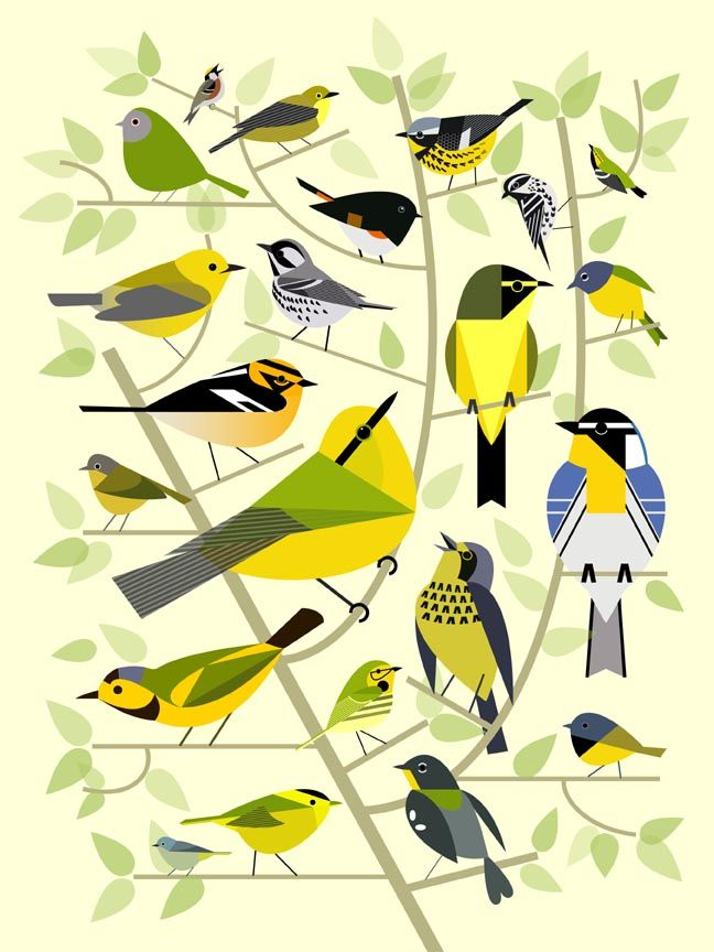 Painting by Scott Partridge. Various wood warblers (parulidae) found in North America. They're stylized in a Charley Harper-like way. See original page for more paintings.