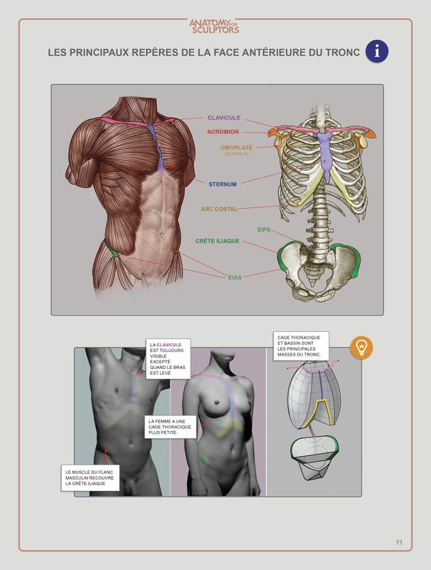 166 Best Anatomy Images On Pinterest Art Tutorials Drawing