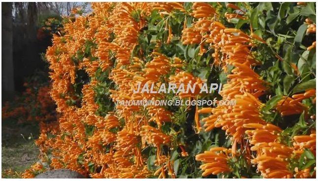 JALARAN API