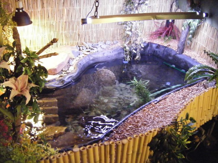 Indoor turtle pond indoor turtle pond water features ponds pinterest awesome Diy indoor turtle pond