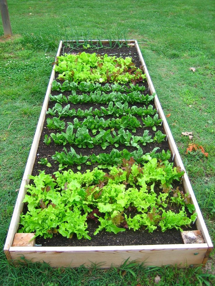 Vegetable garden raised bed vegetable garden and gardens for Vegetable garden box layout