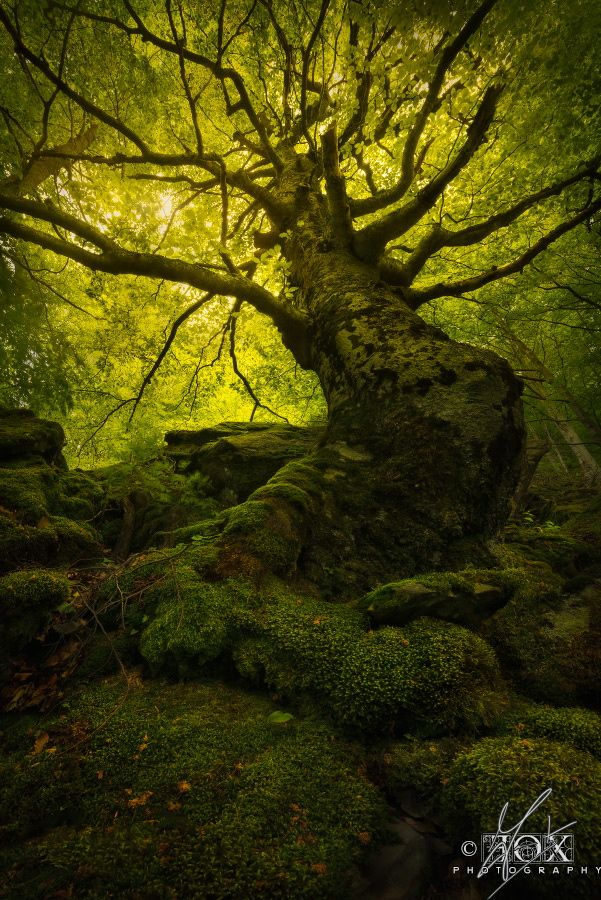 King of the Forest by Enrico Fossati