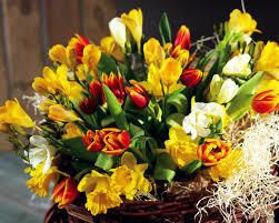 Тюльпаны и нарциссы - оранжево-золотистая буря весны. #сад #цветы #Matla_Flowers