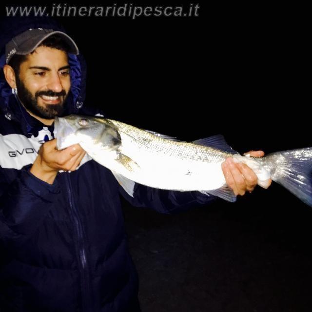 Foce fiume Mesima: Spigola a surfcasting con il vivo pesca fishing
