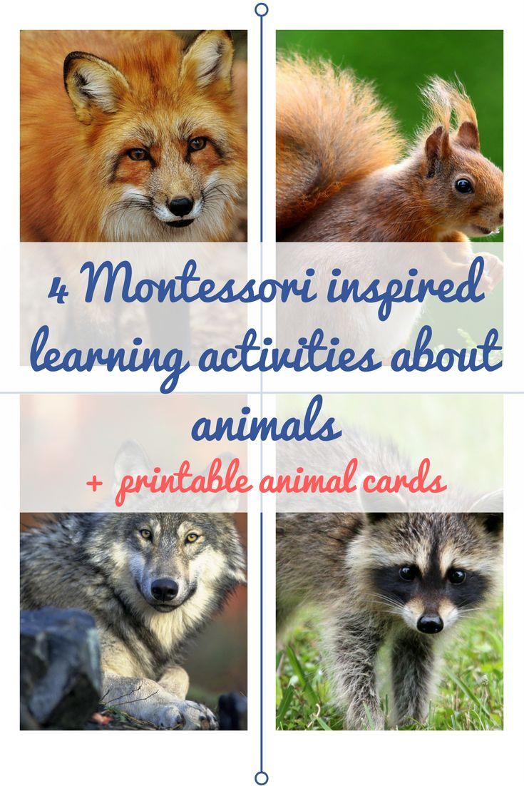 best 25 animal cards ideas on pinterest cricut cards create