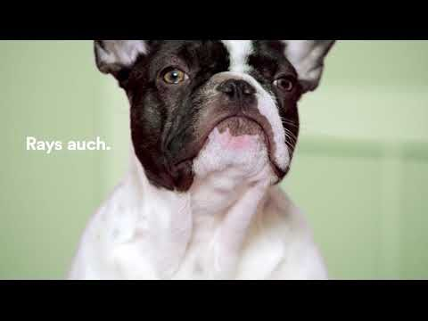 Video ad Adoptify: Ray - YouTube