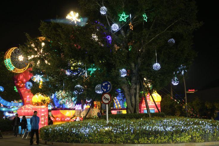 Интересная подсветка дерева в вечернем Шеньчжене