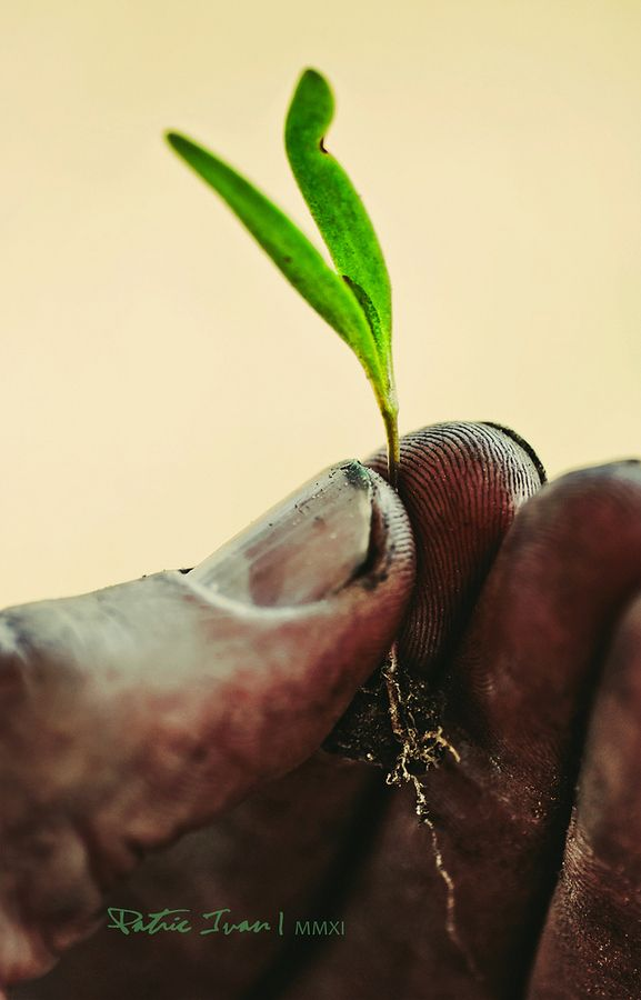 Pure beauty is in the hands. Agriculture Economics. :)