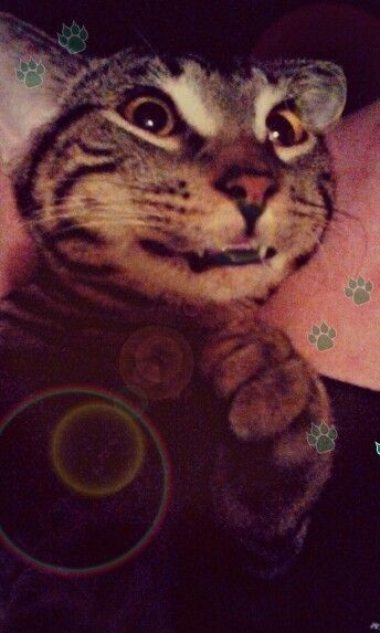 #kittens #smile #cat #cutekittens #handsome #caughtya this is my baby handsome he likes to smile
