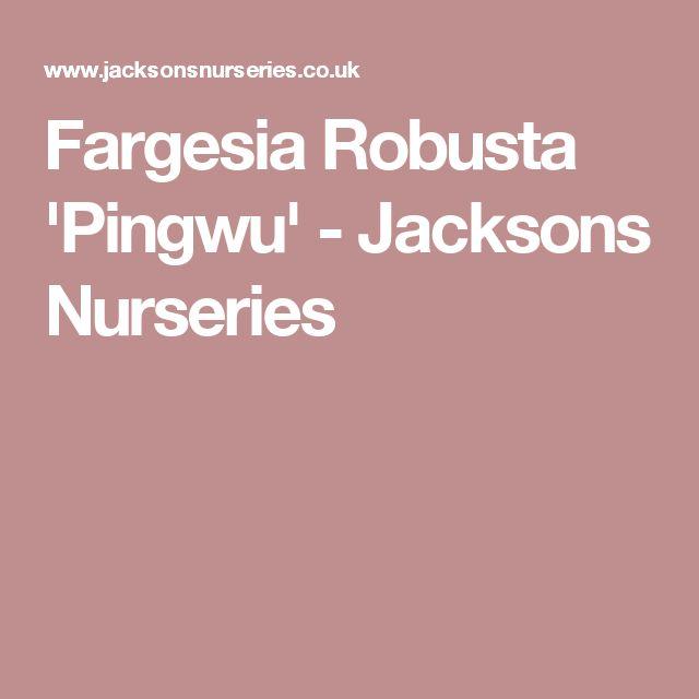 Fargesia Robusta 'Pingwu' - Jacksons Nurseries