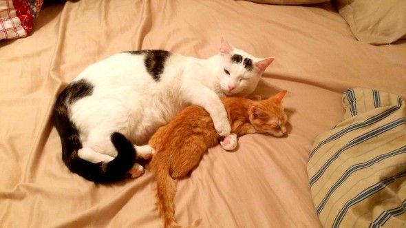 """""""Rescued this kitten today, went to dinner came home to this."""""""