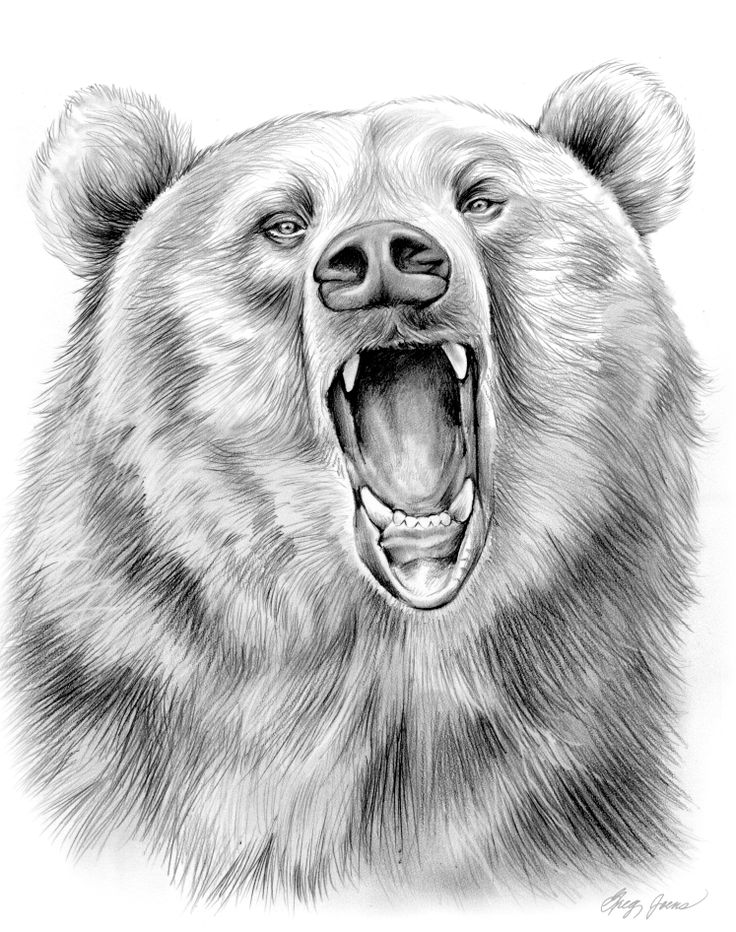 Pencil Art Drawings | Grizzly Bear in Graphite Pencil by *gregchapin on deviantART