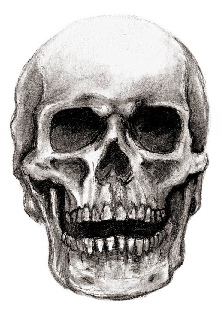 pencil drawings   neatly with pencil see some of the latest drawings of skull select the ...
