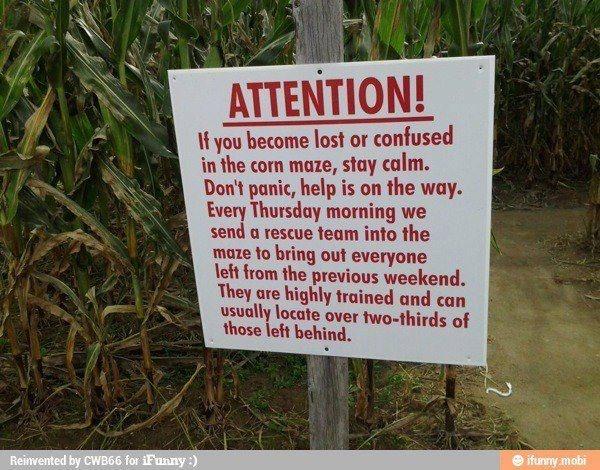 Real scenario:   Lost and Found in the....corn maze!