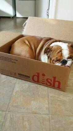 If I fits I should sits!