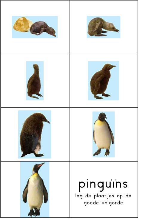 Werkblad tijdsbesef: pinguin