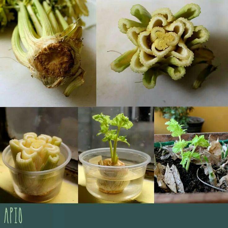 mejores 39 imágenes de semillas en pinterest | huerta, jardinería