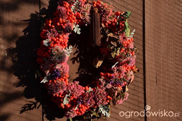 W moim małym ogródeczku - Dorota - strona 247 - Forum ogrodnicze - Ogrodowisko