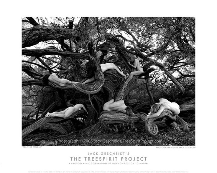 A signature image of The TreeSpirit Project, dedicated to raising awareness of the crucial role trees and forests play in our lives.  Available as a poster or Fine Art Print: http://treespiritproject.com/portfolio/teatreetangle