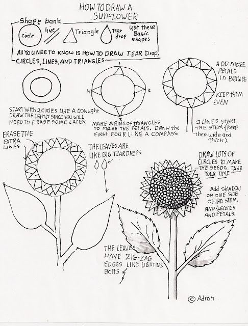 How to Draw Worksheets for The Young Artist: How to Draw A Sunflower, Lesson For Young Artist