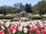 Botanical GardensAtlanta Botanical Gardens, Gorgeous Gardens, Travel Tips, Flower Power, Botanical Gardentulip, Places, Atlanta Bloom, Atlanta Georgia Travel, United States