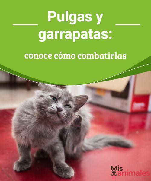 Pulgas y garrapatas: conoce cómo combatirlas Para combatir pulgas y garrapatas consulta al veterinario las opciones más adecuadas de acuerdo a las características de tu mascota. #combatir #consejos #pulgas #garrapatas