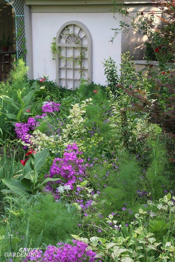 Purple Perennial Flowers 24 Brilliant Choices For Gardens Purple Perennials Perennial Plants Perennials