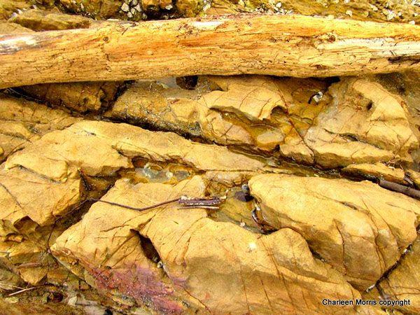 Textures of Tallebudgera Creek Gold Coast by Charleen Morris, via Behance