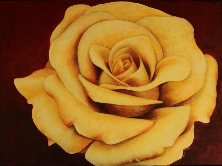 Yellow Rose, 600x 600mm, acrylic on canvass, painted by Susan Brett.