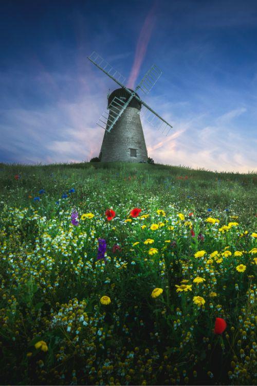 tulipnight: Whitburn Windmill by Kris Greenwell