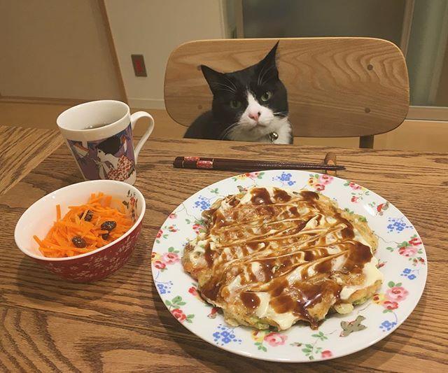 夫が旅行で自然薯を買ってきてくれたのでとろろご飯にしようかと思ったけど、とろろご飯って気分じゃないので自然薯入りお好み焼きにしました。 青海苔が欲しい。 大阪の人はお好み焼きおかずにご飯食べるみたいですね。 #猫 #ねこ #cat #ねこ部 #元野良猫 #保護猫 #黒猫 #デブ猫 #愛猫 #日本猫 #はちわれ #クロ #tuxedocat #catstagram #おうちごはん #晩ごはん #ひとりごはん #お好み焼き #クロとごはん