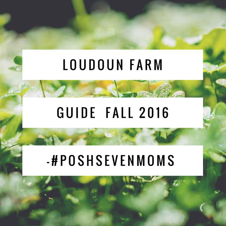 Tell your friends:Here are our picks for you and your family, sourced from Loudoun County, VA Fall Farm Tour. Our favorite farms in Loudoun...