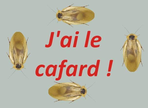 """Avoir le cafard"""" est une expression très utilisée en France pour dire que l'on est déprimé. En fait, c'est un peu différent d'être déprimé car on ressent aussi un certain sentiment de nostalgie."""