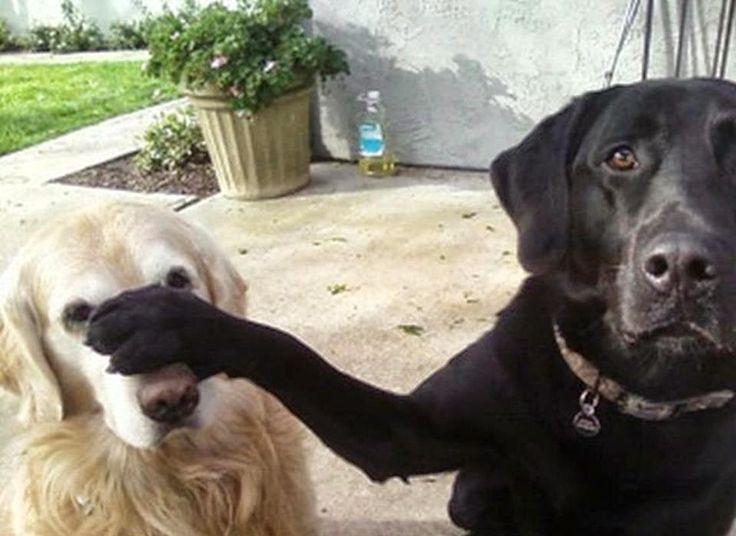 grappige foto: hij hoeft geen honden snack
