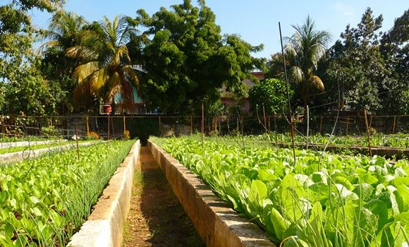 Cuba Organica  Most Cuban farms on state-owned land are required to send a share of crops to institutions such as schools or nursing homes.
