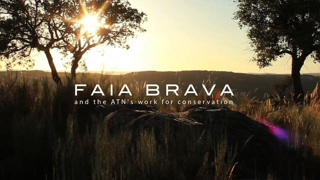FAIA BRAVA and the ATN's WORK FOR CONSERVATION. Uma curta metragem documental sobre a natureza e vida selvagem que habita a primeira reserva natural privada de Portugal e do trabalho que a ATN (Associação Transumância Natureza) tem vindo a desenvolver neste local. A short documentary film about the amazing wildlife that inhabits the first private natural reserve in Portugal and the conservation work that the ATN (Associação Transumância e Natureza) has been developing on the field.