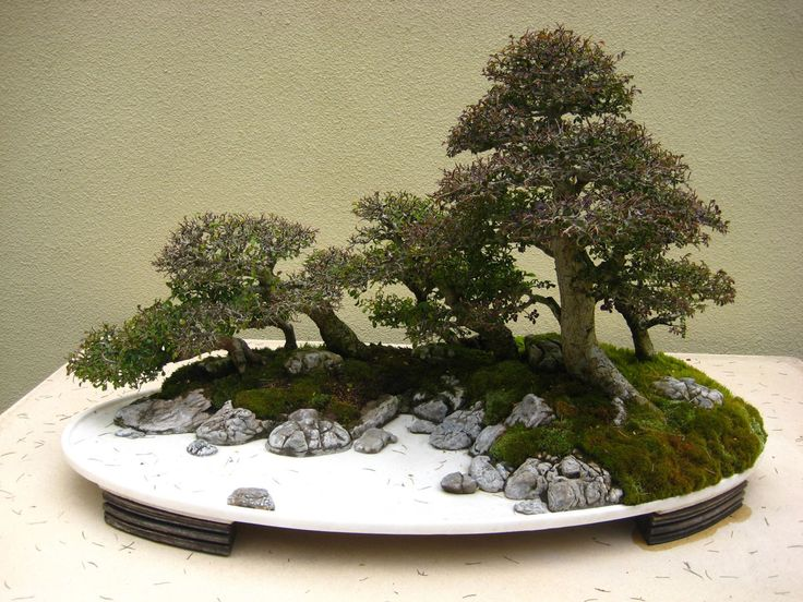 114 best images about little things on pinterest trees for Zen garden trees