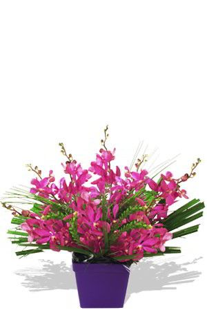 """Buy """"Curious"""" for $77.60. For You, Our Discerning Customer, We Have Hardy And Long-lasting, Yet Exquisitely Delicate Orchids In A Boxed Arrangement With Spear Grass And Palm Leaf. They Will Stun You With Their Burst Of Colour And Intrigue You With Their Intricate Blooms. Satisfy Your Curiosity And Order This Arrangement Today.to Personalise Your Gift, You Can Order A Bottle Of Wine To Be Sent With Your Order. For Curious, We Recommend A Bottle Of Sparkling Wine To Leave A Lasting Impression."""