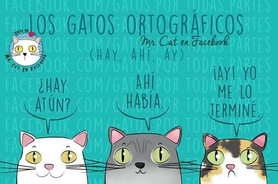 Spelling cats in Spanish! Aprende a escribir bien en español. #spelling #cats #languages #translation #spanish #espanol