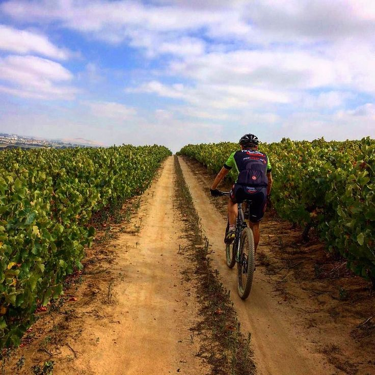 Meanwhile in Africa the trails are epic and the vineyards are beautiful. 3hrs of riding go by in a snap. I love this place! #southafrica #mtb #bike #bikelife #training