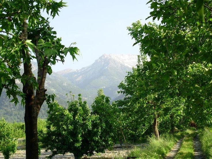 Honaz Dağı Milli Parkı-Denizli ili, Honaz ilçesi sınırları içerisinde yer almaktadır.  Afyon-Denizli ve Afyon-İzmir devlet karayolu ile ulaşılmaktadır.  Milli parkın ana kaynak değerlerini, Ege Bölgesi'nin en yüksek dağı olan (2528 m) Honaz Dağı bünyesindeki kaynaklar oluşturmaktadır.  Honaz Dağı, uygun eğim koşulları ve kar yağışının yeterli düzeyde olması nedeniyle ülkemizin kayak potansiyeli yüksek alanlarından birisidir.