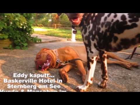 Baskerville Hotel - Sternberg De - Visit http://germanhotelstv.com/baskerville Set on the edge of a forest the dog-friendly Baskerville Hotel lies just 100 metres from the scenic Großer Sternberger See Lake. It offers a daily breakfast and free WiFi. -http://youtu.be/OqwEgd1vPHo