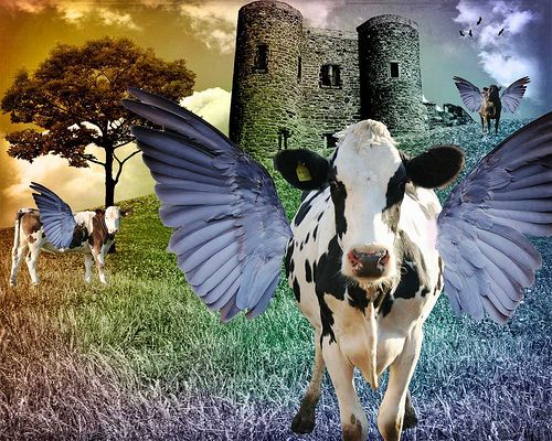 cows will fly | Flickr - Photo Sharing!