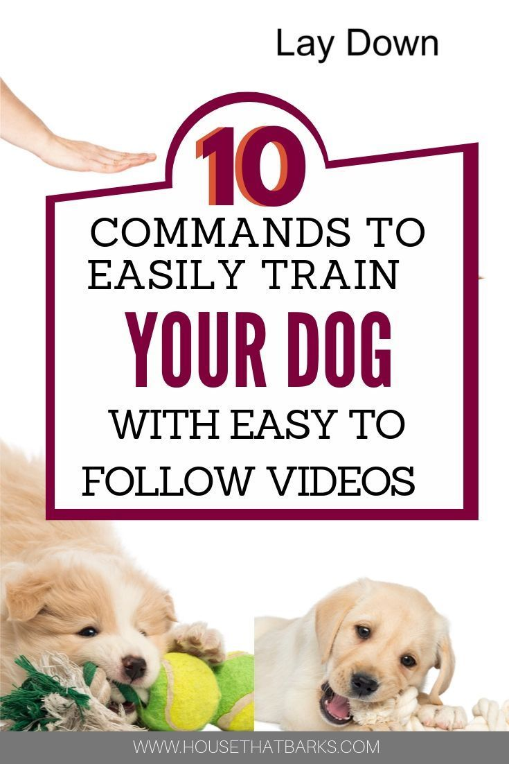 10 Commands To Easily Train Your Dog Dog Training How To Train