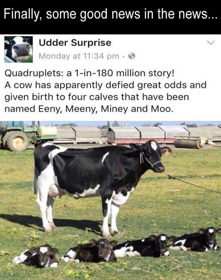 the BEST names for quadruplet calves!