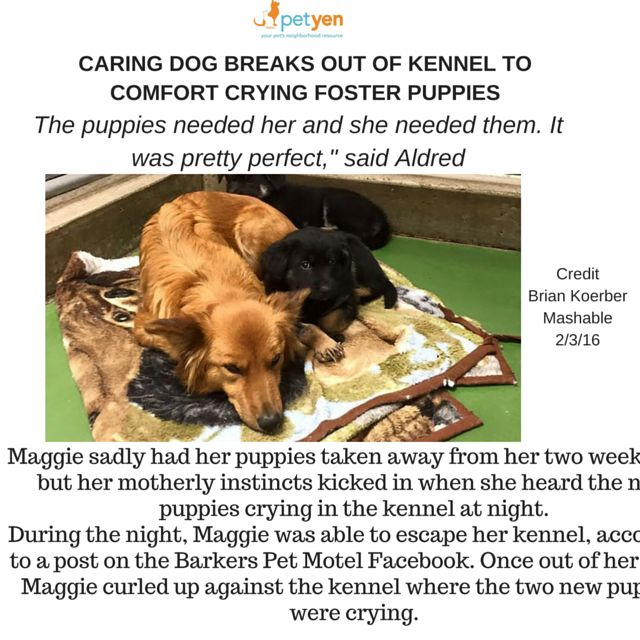 Best Tiny Dogs Tiny Cars Images On Pinterest Central Park - Dog escapes from kennel to comfort abandoned crying puppies