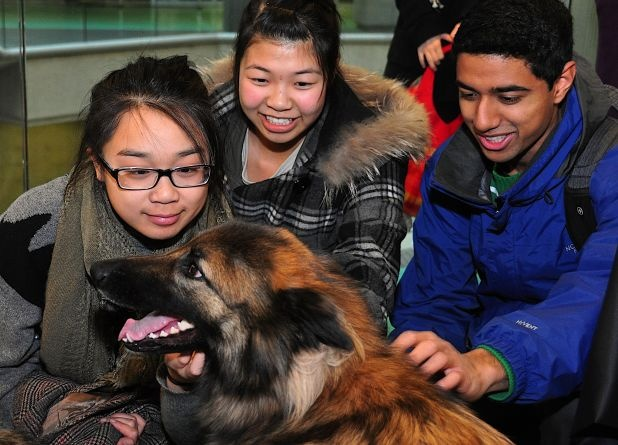 Did you meet Maya today? She was at the SFU Burnaby campus to provide a nice distraction for students from exams.