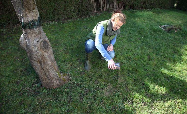 Obstbäume richtig düngen -  Ob Apfel oder Zwetsche: Obstbäume stellen unterschiedliche Ansprüche an die Nährstoffversorgung. Hier lesen Sie, wann und wie Sie Ihr Stein- und Kernobst im Garten düngen sollten.